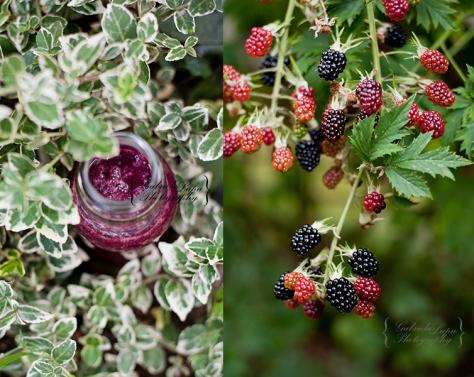 blackberry smoothie
