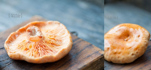 Lactarius deliciosus